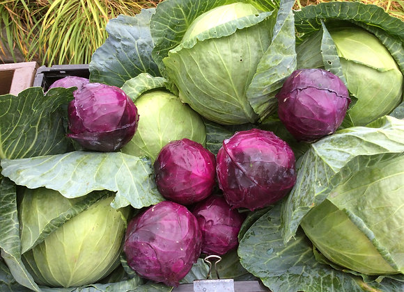 SMALL RED CABBAGE