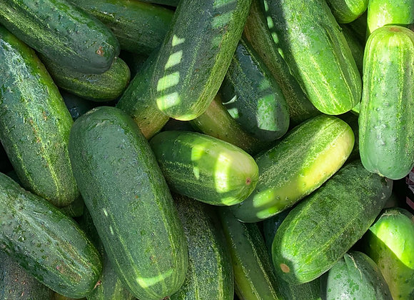 PICKLING CUCUMBERS - Larger 3 for $1