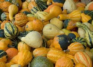 GOURDS 3 for $3