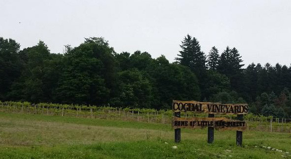 Cogdal Vineyards