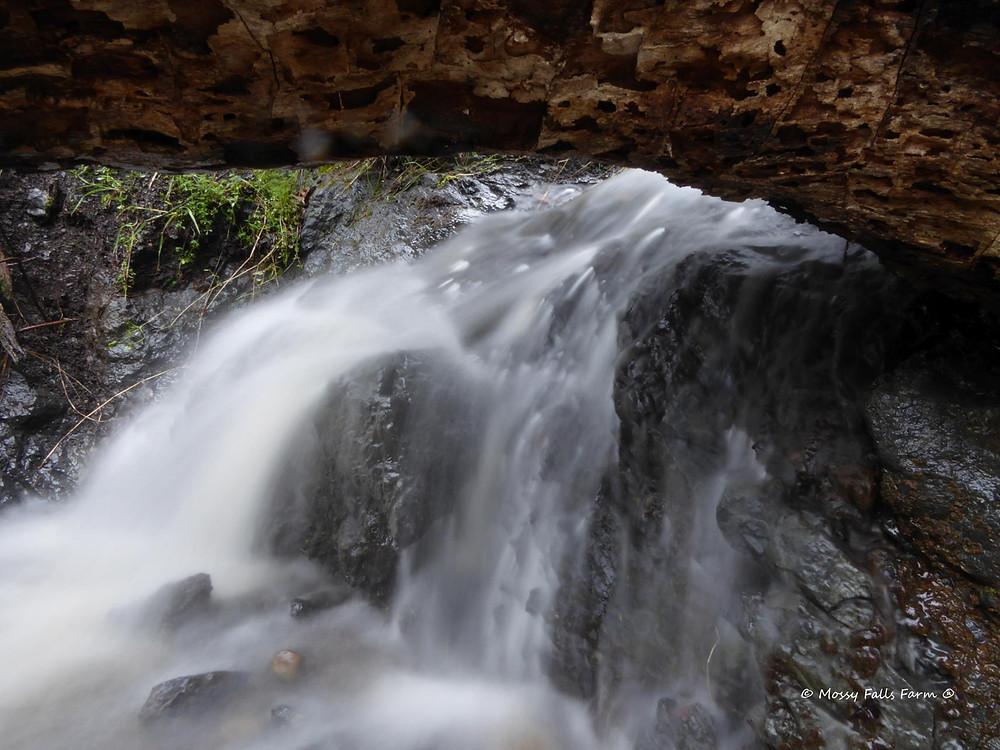 Mystical Waterfall Certified Organic Essential Oils Mossy Falls Farm
