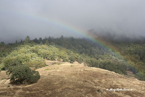 Rainbow over Mossy Falls Farm Certified Organic Family Farm