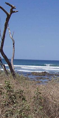 Playa Langosta surf break reef