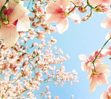 Inspirações: 8 Dicas incríveis para fazer uma festa na Primavera.
