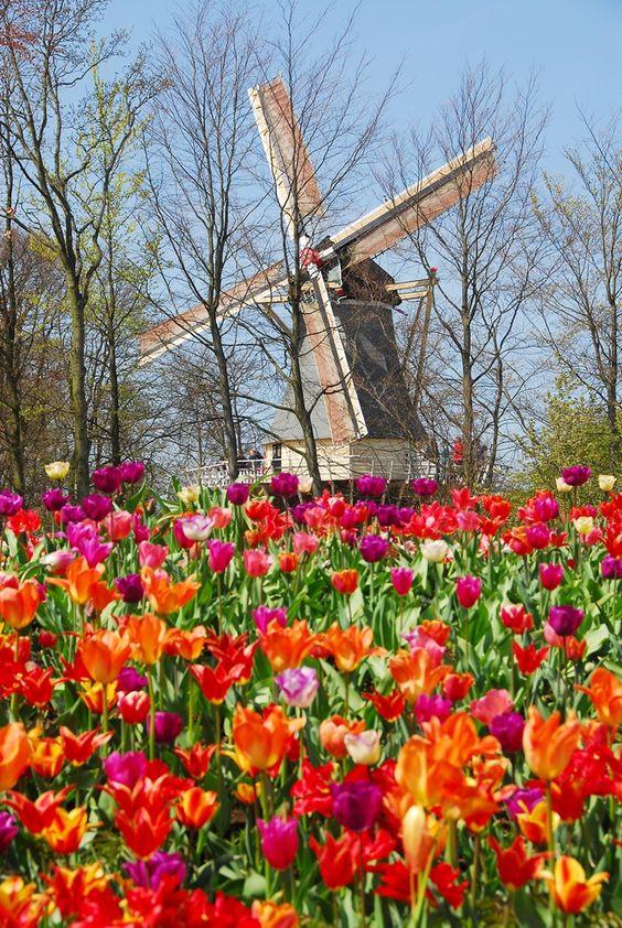 Festa na primavera