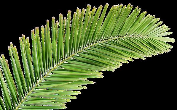 Palm-Leaf-1.png