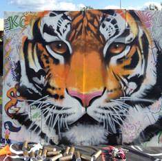 MAHA Tiger