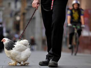 Яйцо курицу учит