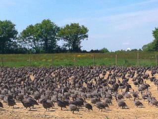 Франция лидирует в органическом птицеводстве Европы
