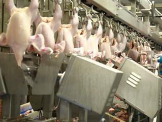 В 2015 году Россия может экспортировать 100 тыс. т мяса птицы