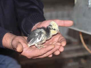 Дом для дикой птицы