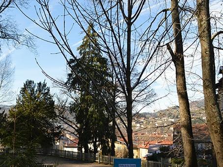 Un arbre de la laïcité à Lamastre !