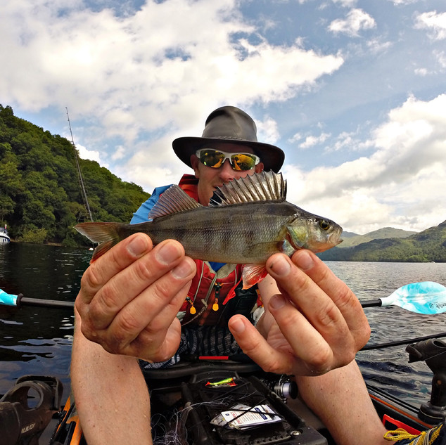 Loch Lomond Perch