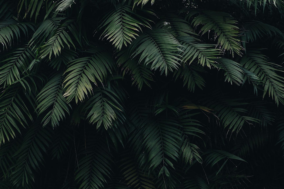 Header-Tropical-iPhone-Wallpaper-Collect