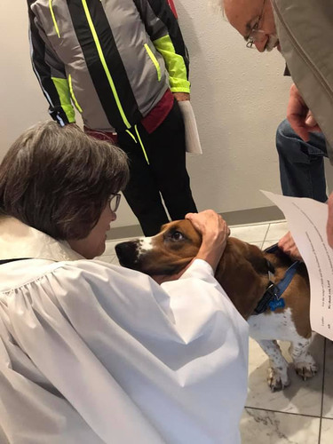 Blessing of the animals 2019 Luke and Mo