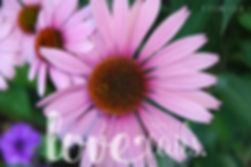 Love never fails (1 Cor 13:8) bible card with pretty flower picture.