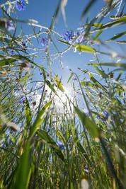 Glaser Moor Kritzow_10.jpg