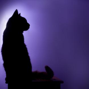 Miles_purple.jpg