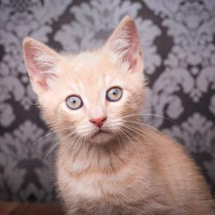 Rupert_kitten.jpg