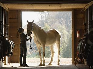 Cavalo Stall Retrato