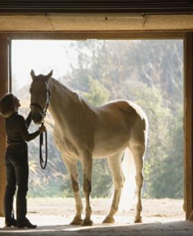 Acupressuur cranio-sacraal therapie paarden