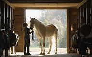 פנסיון סוסים