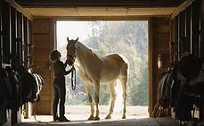 Häst Stall porträtt