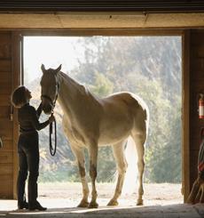 Pferd beim Absatteln