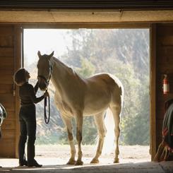 Horse and Farm care