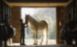 Horse Stall Portrett