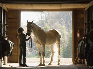 Horse Stall Portrait