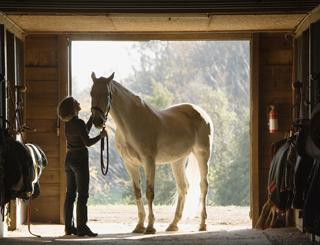 Coaching Equin