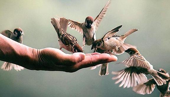 NVL_Birds.jpg