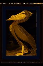 NhanTran_pelican.png