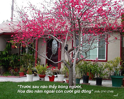 NNH_Hoadao-1.jpg