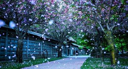 NVL_snow.jpg