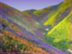 AnhTu_Hoa trên sườn đồi.jpg