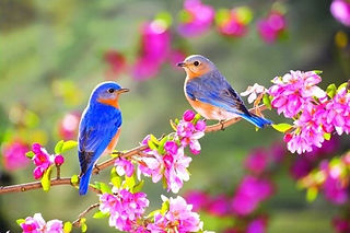 DHT_birds.jpg