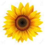 TL_sunflower.jpg