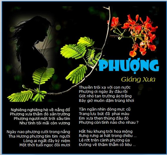 TL_Phuong.png