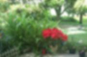 TrinhCat_flower.jpg.w300h199.jpg
