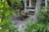 HMBNga_Gà thả vườn miền quê (2).jpg