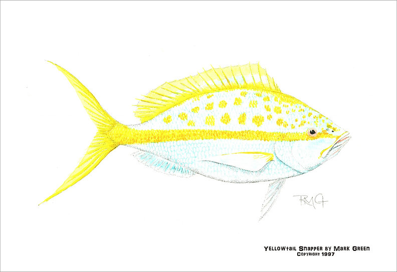 Book Yellowtail.jpg