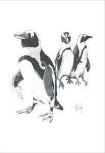 Jackass Penguins.jpg