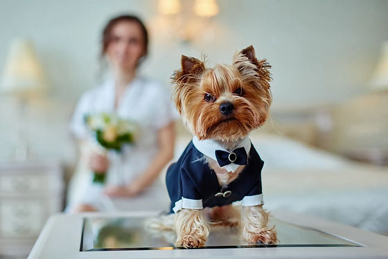 Dog with Bride at Wedding