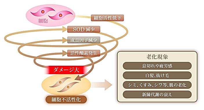 図32.jpg