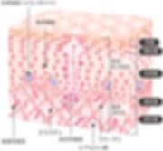 図13.jpg