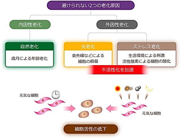 図29.jpg