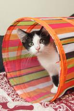 Black white kitten portrait - Copy.jpg