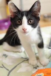 black.white-kitten-200x300.png